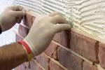 Дождевой червь это животное