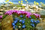 Почему пернатые улетают на юг, и какие птицы остаются зимовать на родине