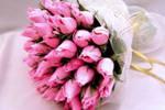 Карликовые обезьянки живут в джунглях