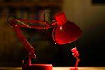 Здоровье шотландских кошек